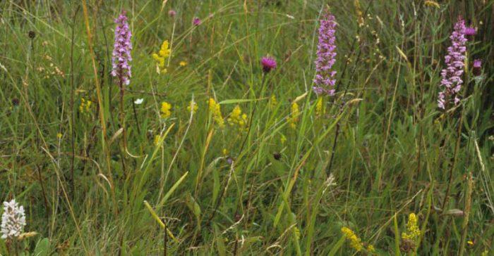 Flora by Lynda Huxley