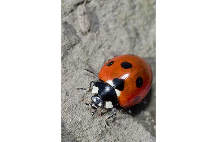 Ladybird by Paul Malone