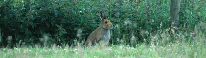 Hare by Lynda Huxley