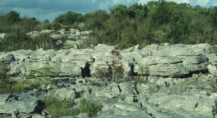 Terrestrial Ecology by Lynda Huxley