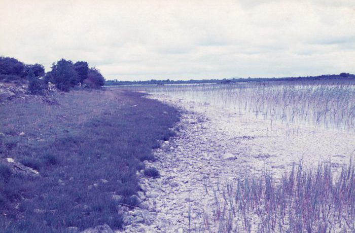 Vegetation zones (Castle Carra in Distance), August 1975 by Jonathan Shackleton