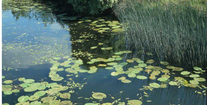 Aquatic Ecology by Lynda Huxley
