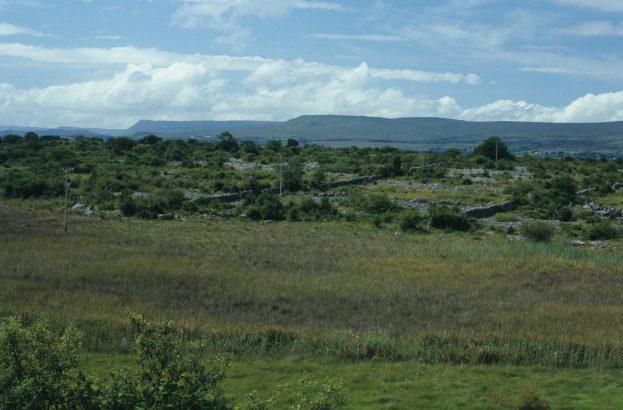 Area of Fen by Lynda Huxley