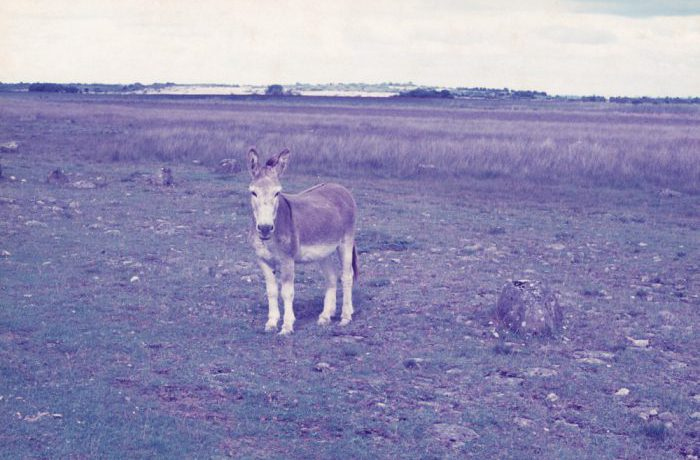 Fen at Kilkeeran, August 1975 by Jonathan Shackleton