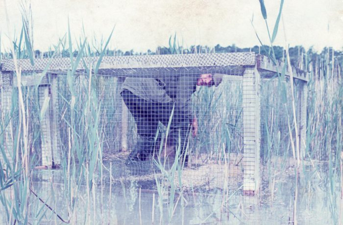 Frank O'Hara putting oats in duck trap. August 1975 by Jonathan Shackleton