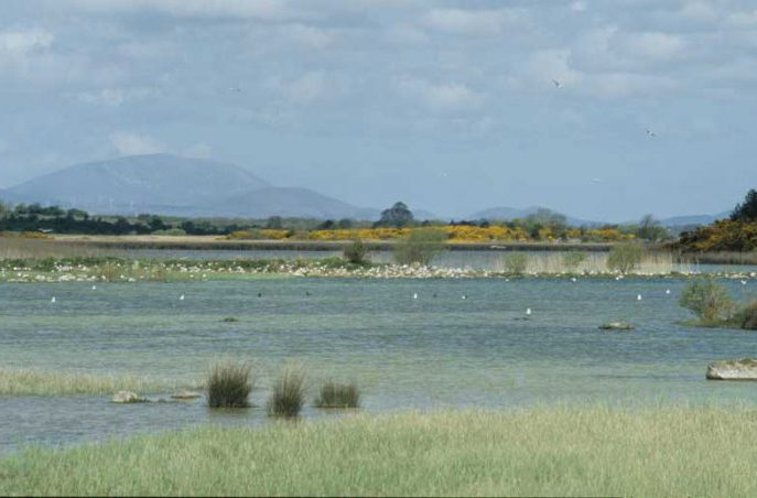 Gull colony at Kilkeeran by Lynda Huxley