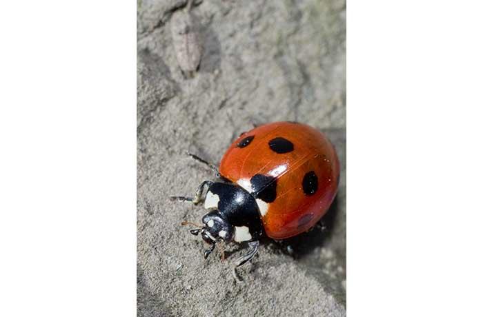 Ladybird by Paul Malone