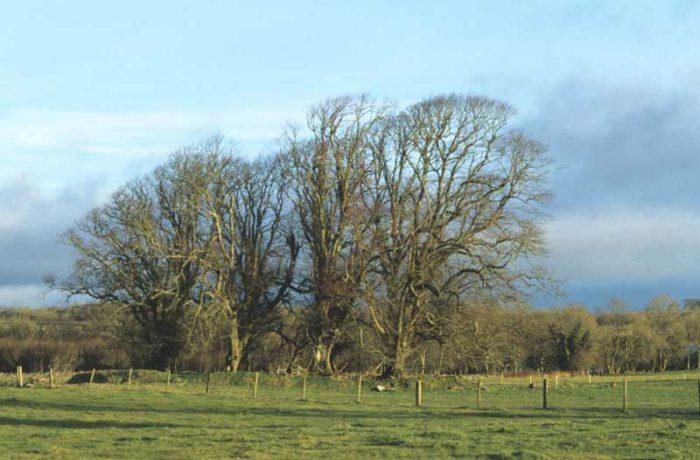 Ringfort near Doon Peninsula by Lynda Huxley