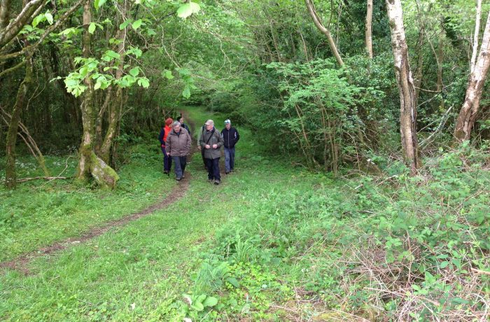 Mayo Naturalists Field Club second outing on 24th May 2014 - 3- by Tom Quinn