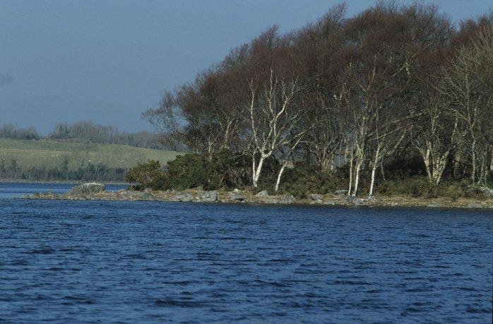 Silver Birch Trees by Lynda Huxley